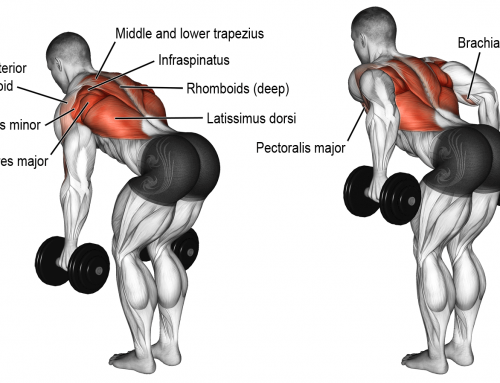 Deltoid workouts : deltoid exercises at home